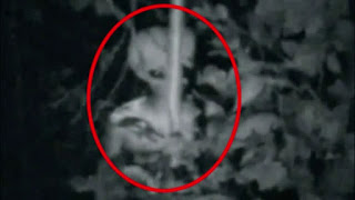 Resultado de imagen de alien real images